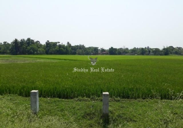 30 Bigha land available for sale in Dhulagarh